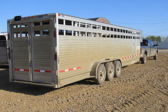Gooseneck trailer used for transporting cattle.