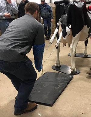 Calving clinic participants practice skills