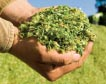 Handful of silage.