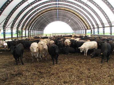 Iowa Beef Center Iowa State University