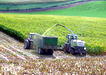 silage production survey and analysis