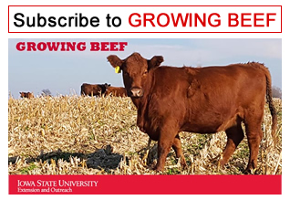 subscribe to Growing Beef