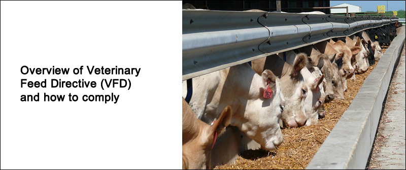 Overview of Veterinary Feed Directive (VFD) and how to comply