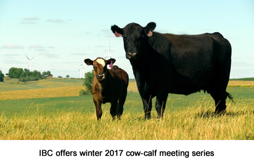 IBC offers winter 2017 cow-calf meeting series