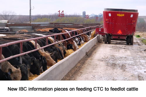 New IBC information pieces on feeding CTC to feedlot cattle